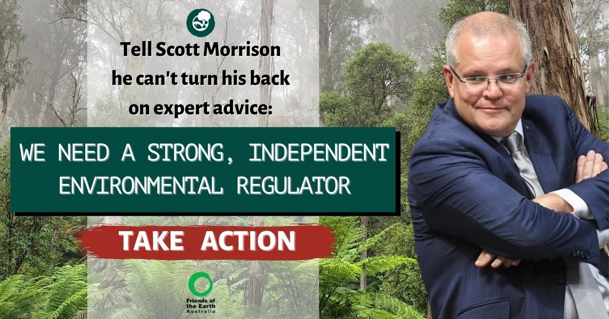 Scott Morrison turning his back in a forest: Tell Scott Morrison he can't turn his back on expert advice: We need a strong, independent environmental regulator. Take Action with Friends of the Earth
