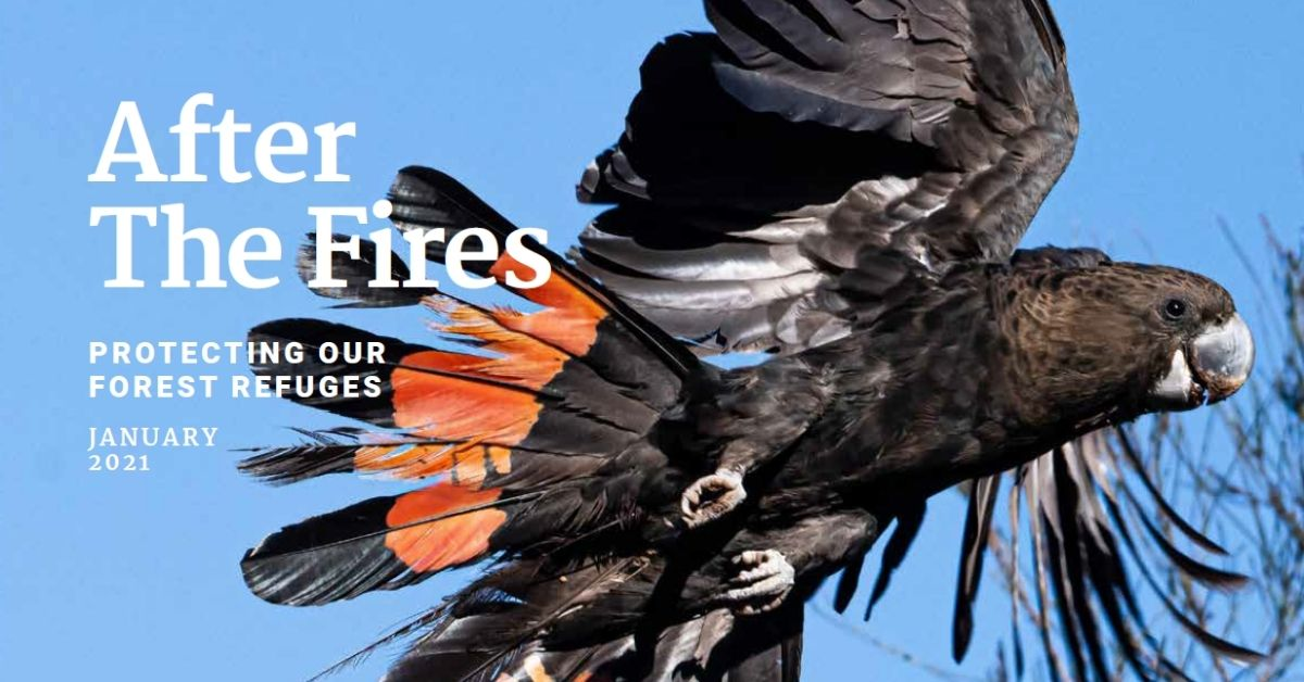 After the fires report cover