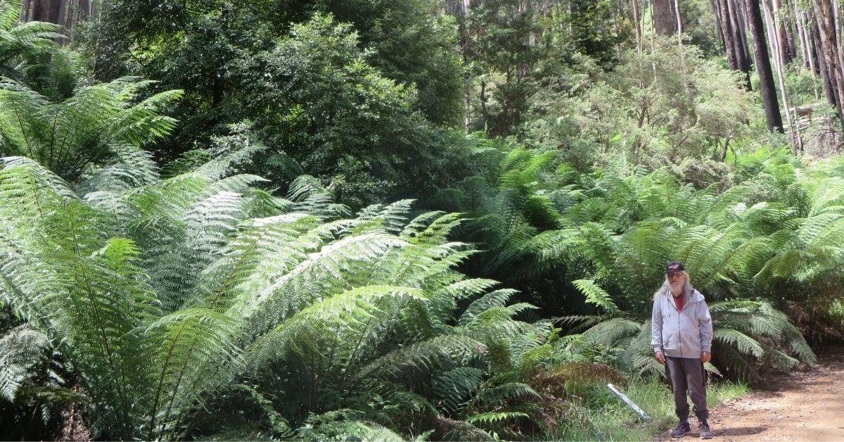 Taungerong Nira-Balluck Elder Uncle Larry Walsh walks through forest nears Snobs Creek