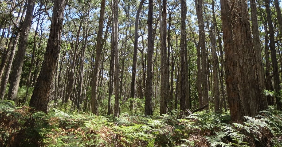 Tallarook forest, south of Seymour is also on the VicForests \