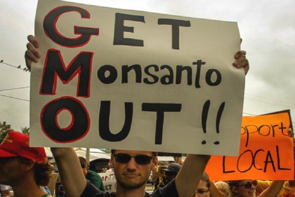 GMOS_(1).jpg