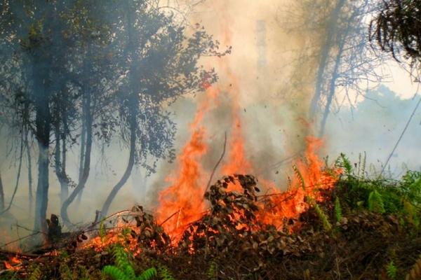 Central_Kalimantan_Fires.jpg