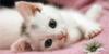 Meow Mingle Kitten Adoption