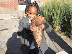 sweet_potato_harvest_small.png