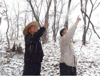 acorns_rake_choi.JPG