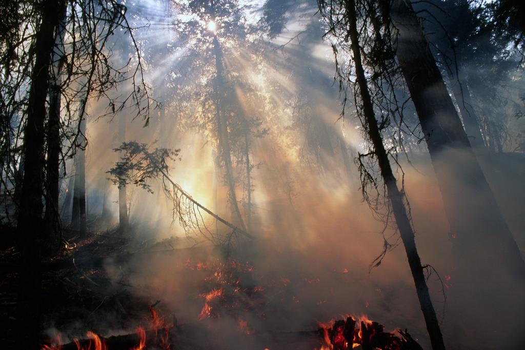Forest_Fire.jpg