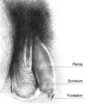pic.1-intact-male-penis.jpg