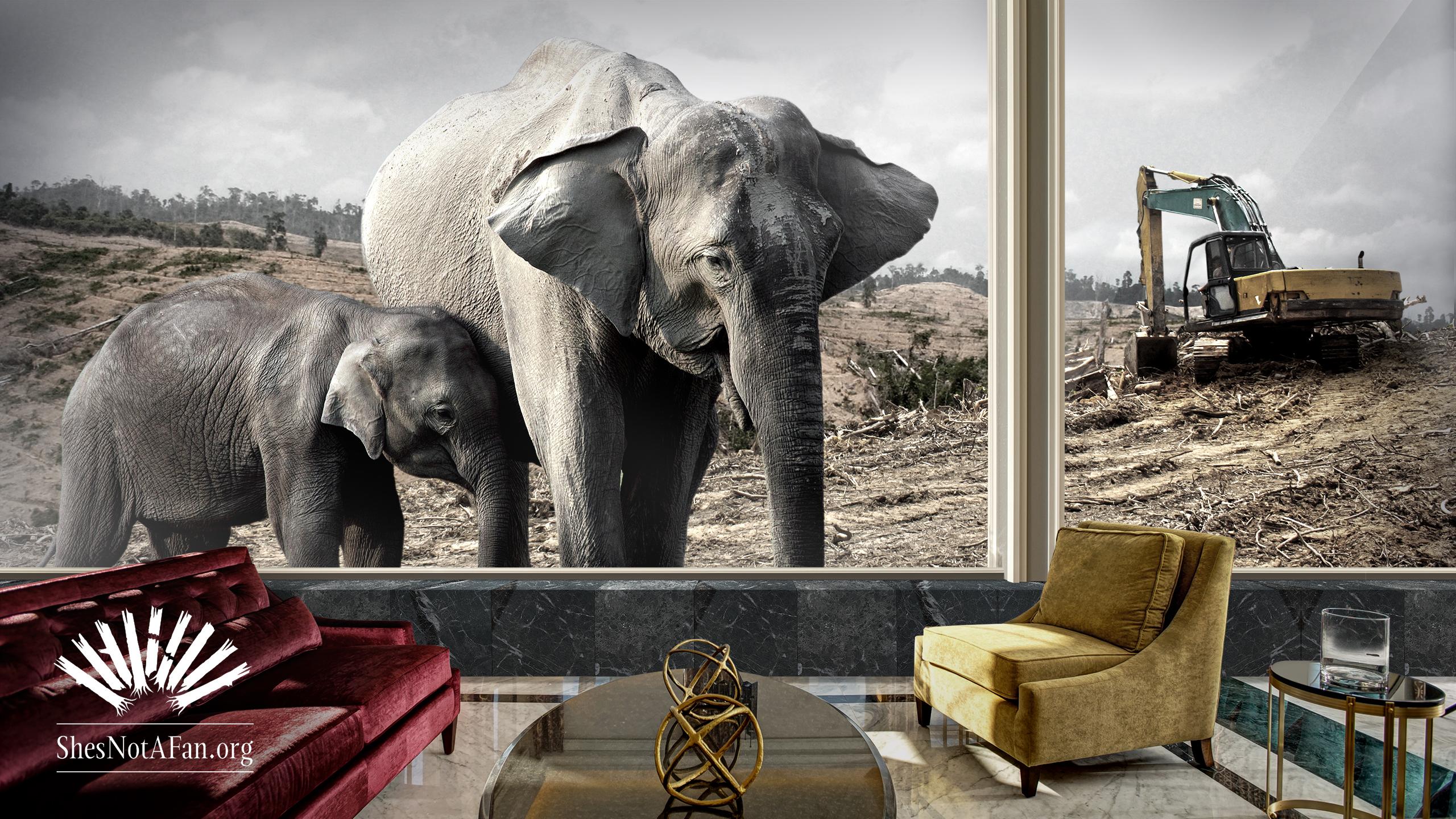 mandarin-elephant-2560x1440-justlogo-elephant2.jpg