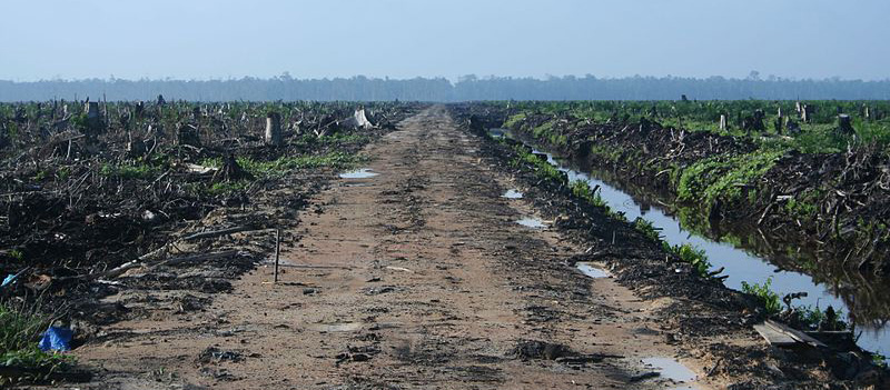 Us banks and brands support illegal forest destruction for palm oil