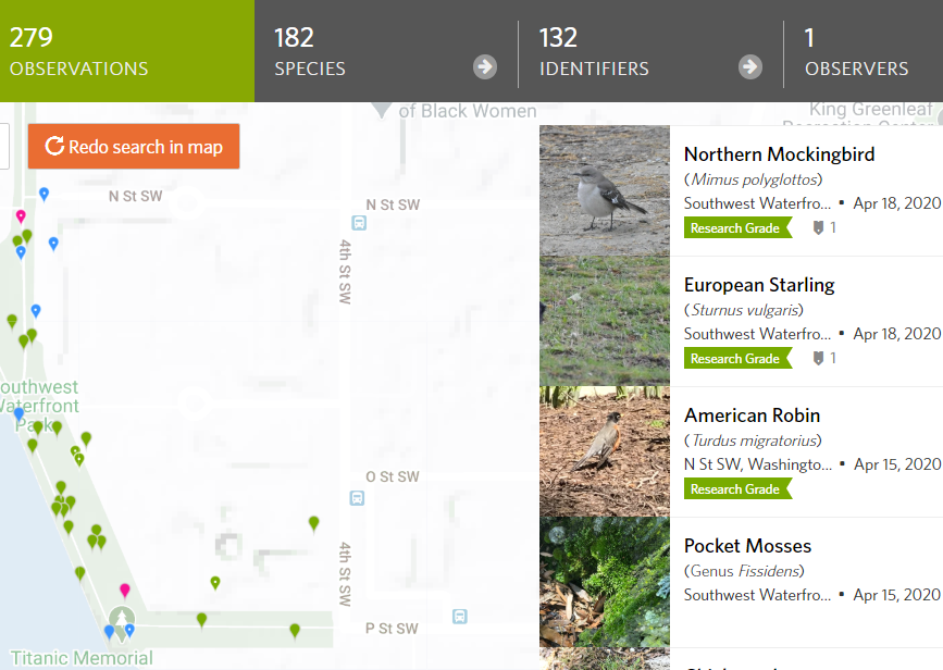 Corinne's iNaturalist Observations