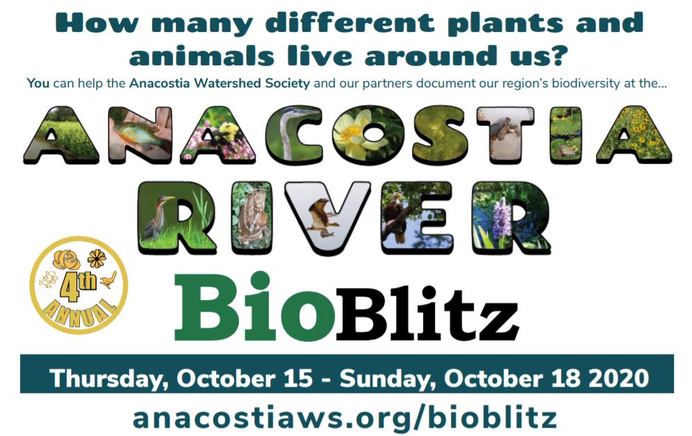 Anacostia River BioBlitz