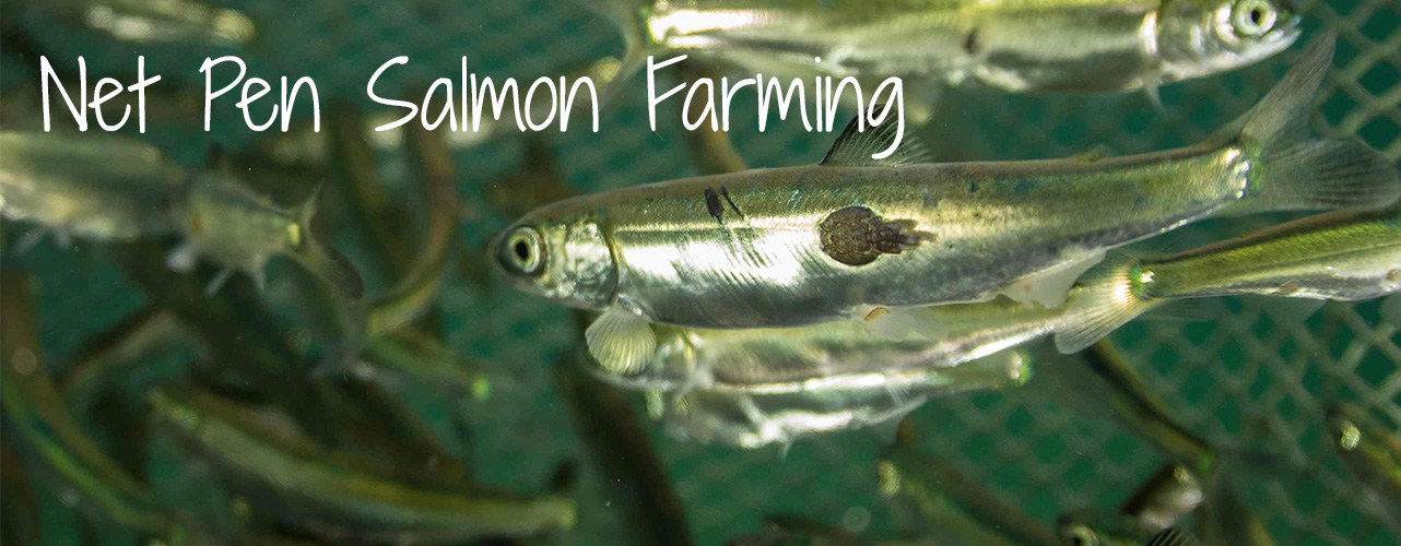Banner_SalmonFarm.jpg
