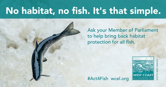 WCEL-Act4Fish_final_FORFACEBOOK.jpeg