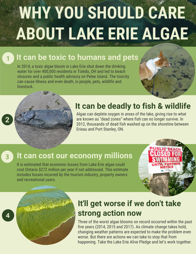 lake_erie_algae_infographic.png