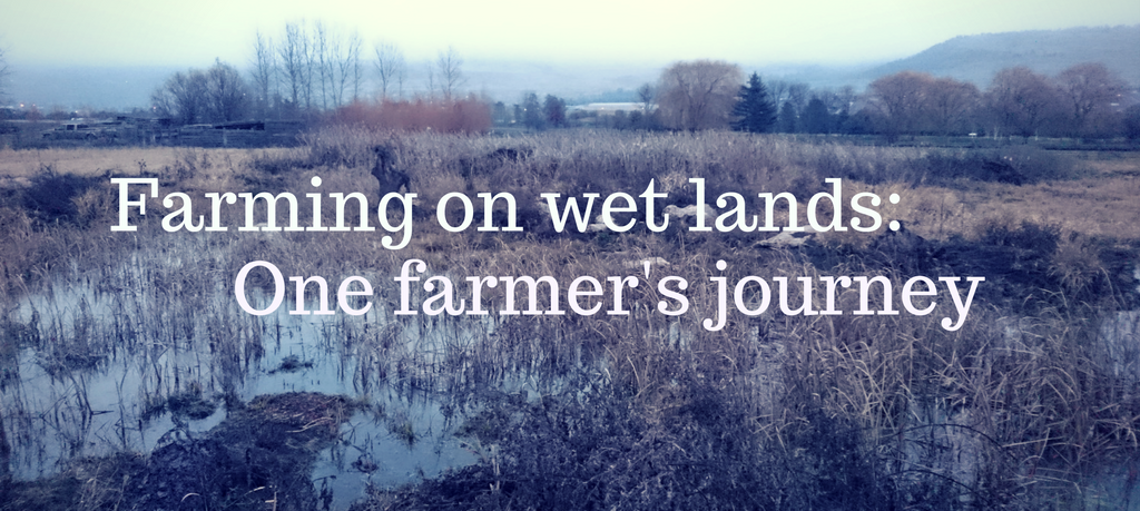 Farming_on_wetlands.png
