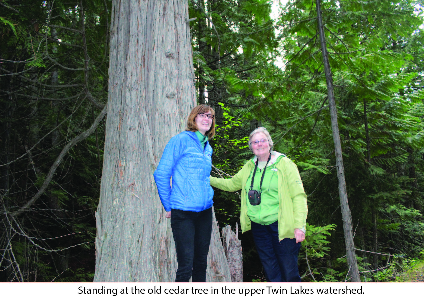 cedar_tree_-_twin_lakes.jpg