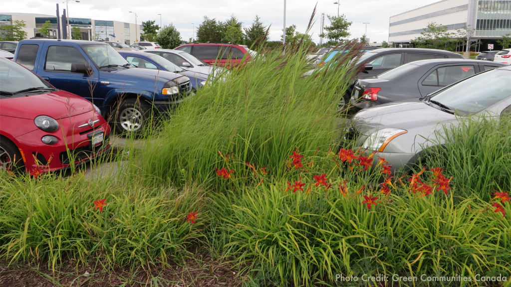 Green_infrastructure_-_Bioswales_in_a_parking_lot_(w_credit)_Photo_Credit__Green_Communities_Canada__(2).png