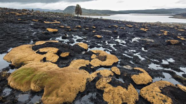 Burnt cushion plants and pencil pine at Lake Mackenzie after bushfires tore through  the area in Tasmania's Central Plateau. Picture: ROB BLAKERS