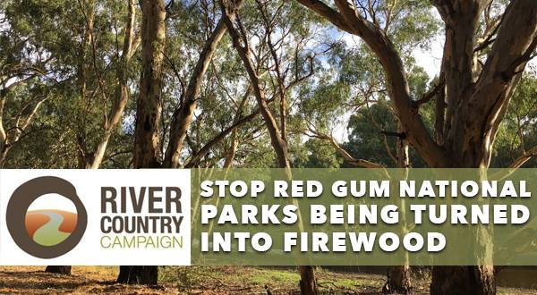 river_red_gum_social.jpg