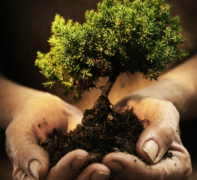 holding_a_tree.jpg