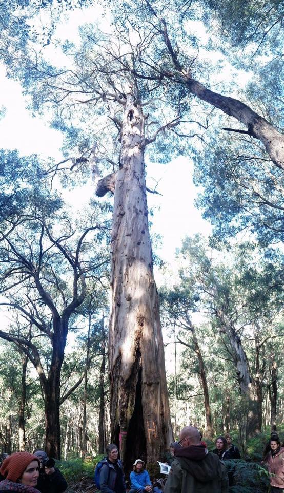 Web_Hermitage_big_tree_lunch.jpg