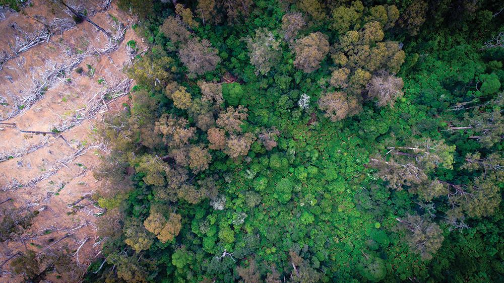 logged-rainforest.jpg