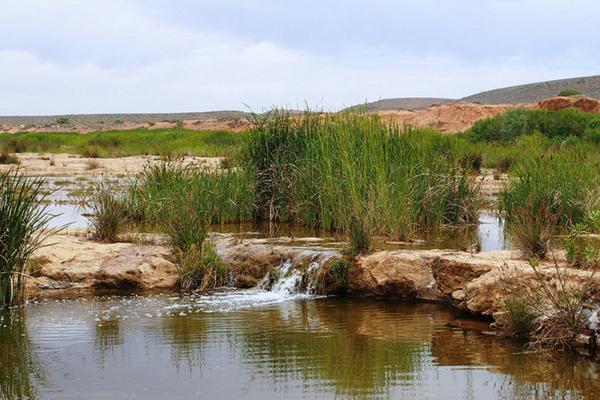 Reeds growing in natural springs in semi arid rural area