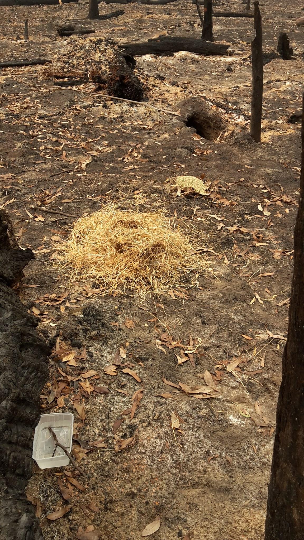 wombat_burrow.jpg