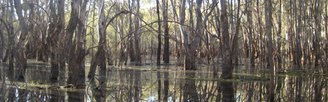 River Red Gum forest and wetlands (photo: Environment Victoria)