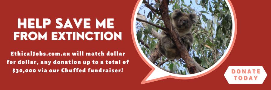 Koala crowndfunder image