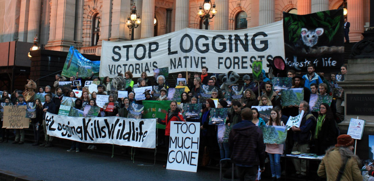 Victoria's ash forests store more carbon than any other studied forest in the world. They are a lifeline in the midst of climate disaster and global upheaval due to extreme weather events.