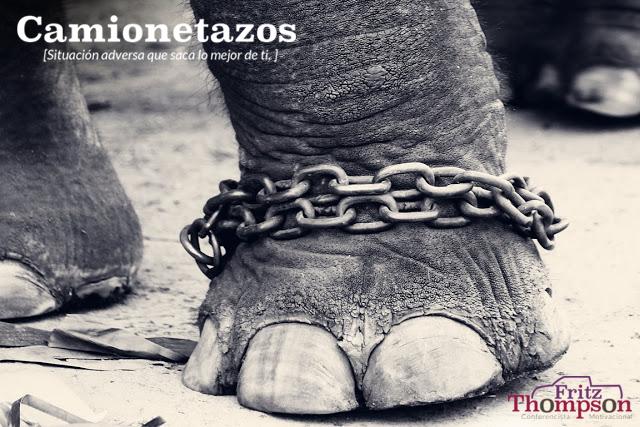 camionetazo_elefante_encadenado.png