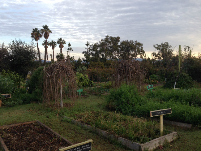 morning_garden.jpg