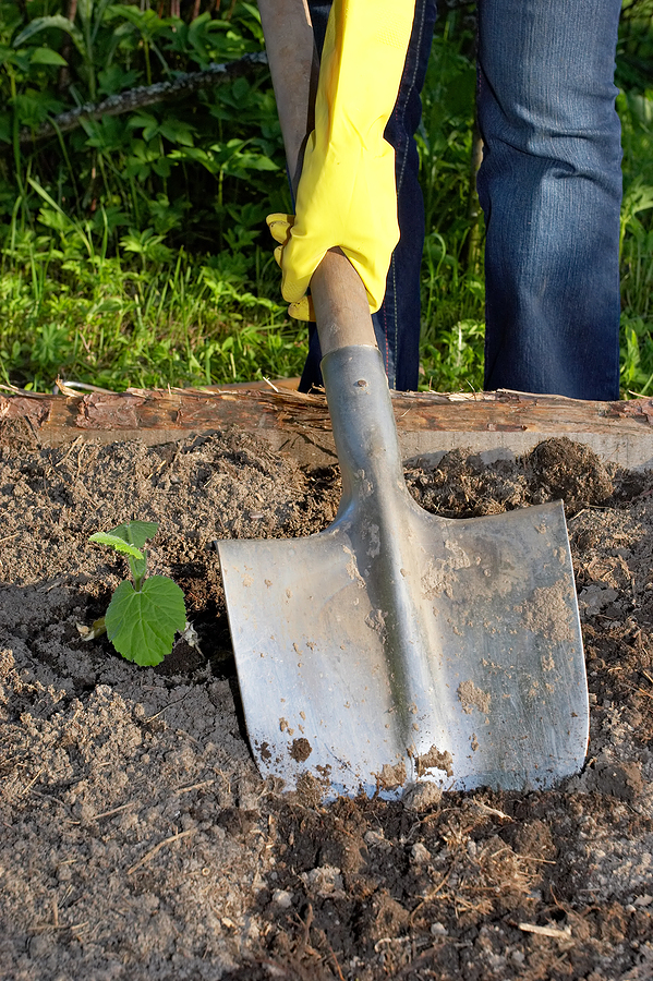 bigstock_Digging_By_Shovel_997704.jpg