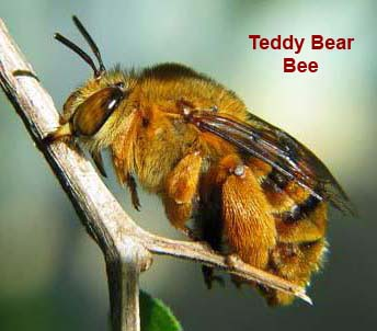 teddy-bear-bee-rev-crop.jpg