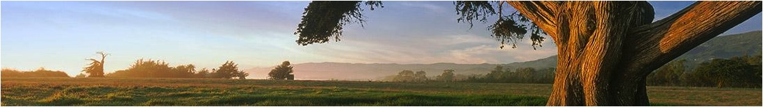 Gaviota_meadow_header.jpg