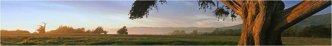 Gaviota_meadow_header.jpg