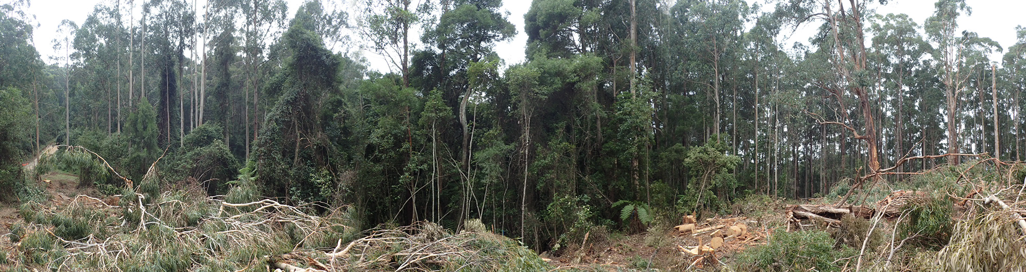 160315_-_Overview_of_Logging_within_min._Rainforest_Buffer_Pugaree_Rd_-_832-502-0017.jpg