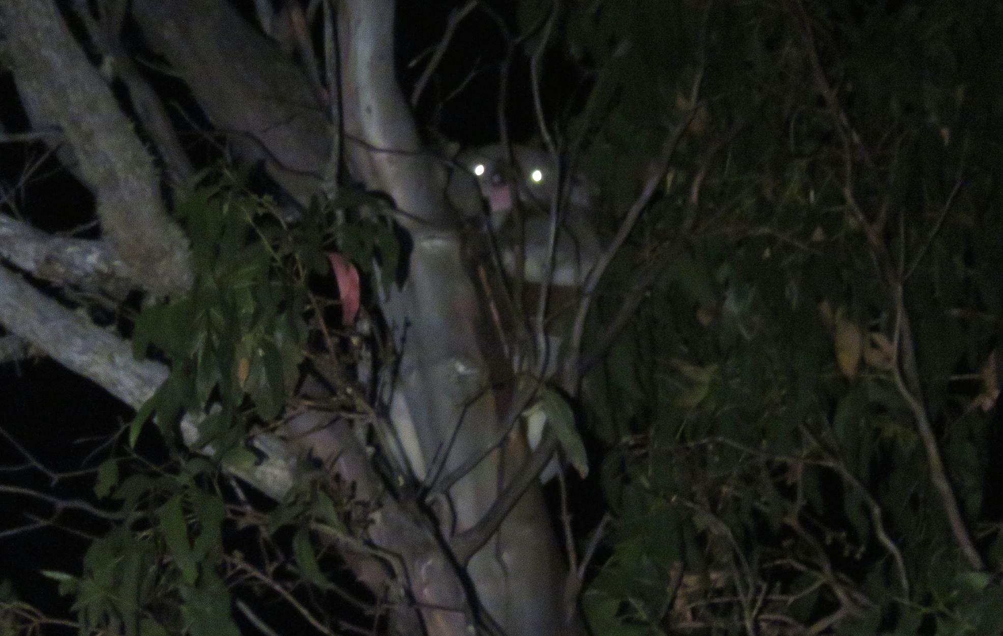Koala_Web_IMG_5031(1)_copy.jpg