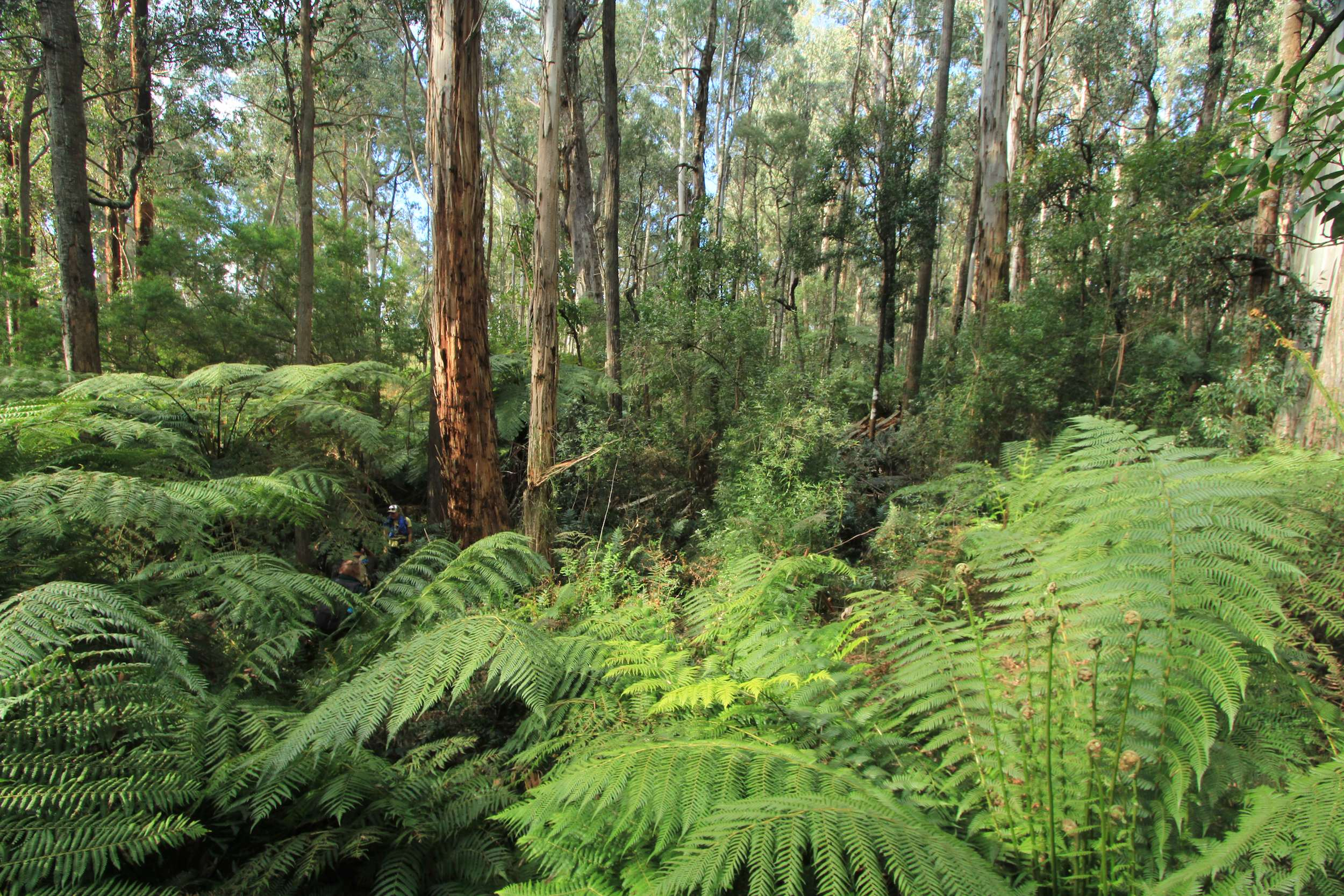 Web_Jersey_Ferns_Forest_scene_IMG_8928_copy.jpg