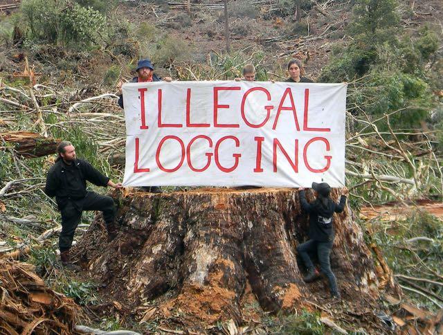illegal_logging_stump_banner_-_crop.jpg