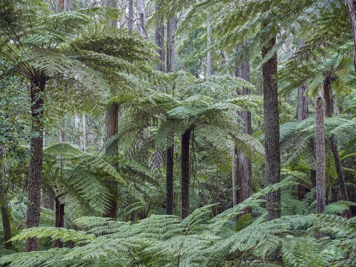 Supreme Court Injunction Halts Logging Of Old Growth Forest