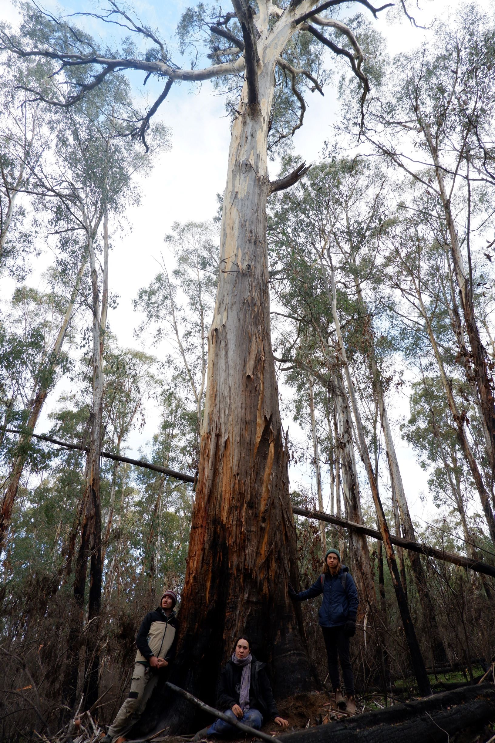 Sensitive fire-affected alpine forests scheduled for logging in the coming months