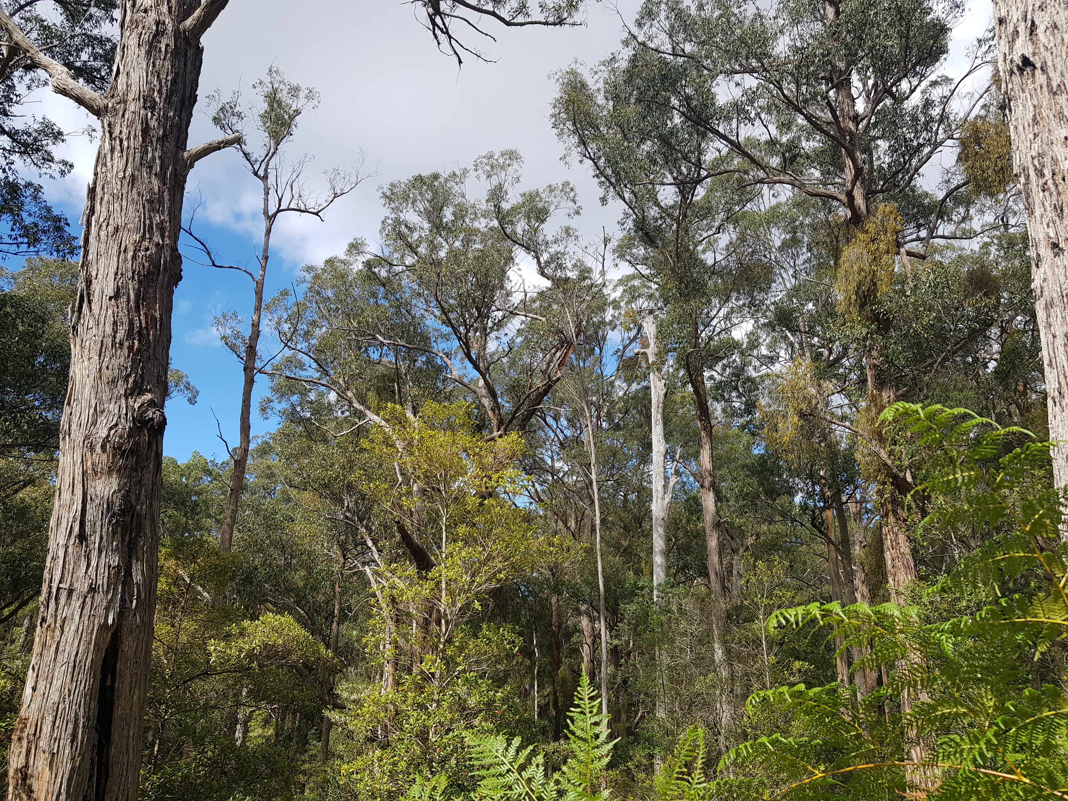 Forests in the Colquhoun still threatened by logging