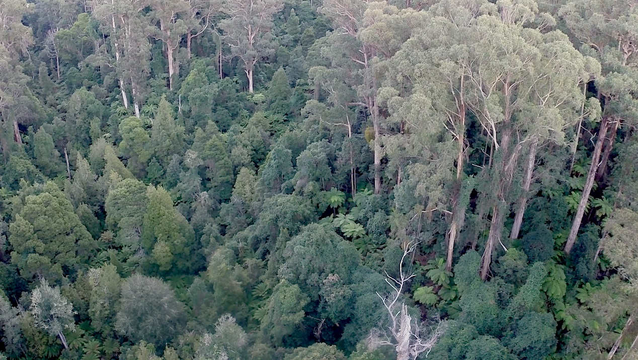 RF_aerial.jpg