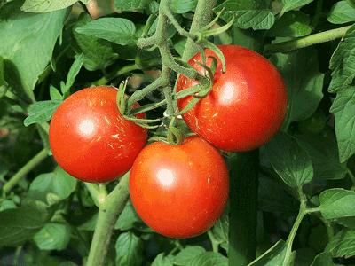 Edible-Gardening.png