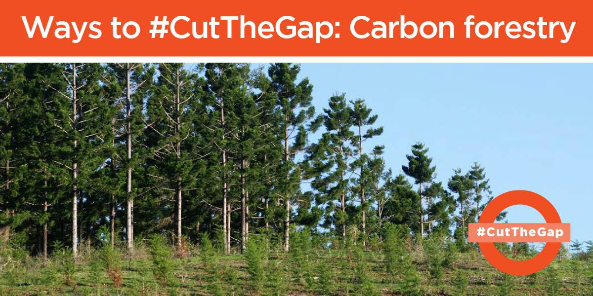 Cut_the_gap_carbon_forestry.jpg