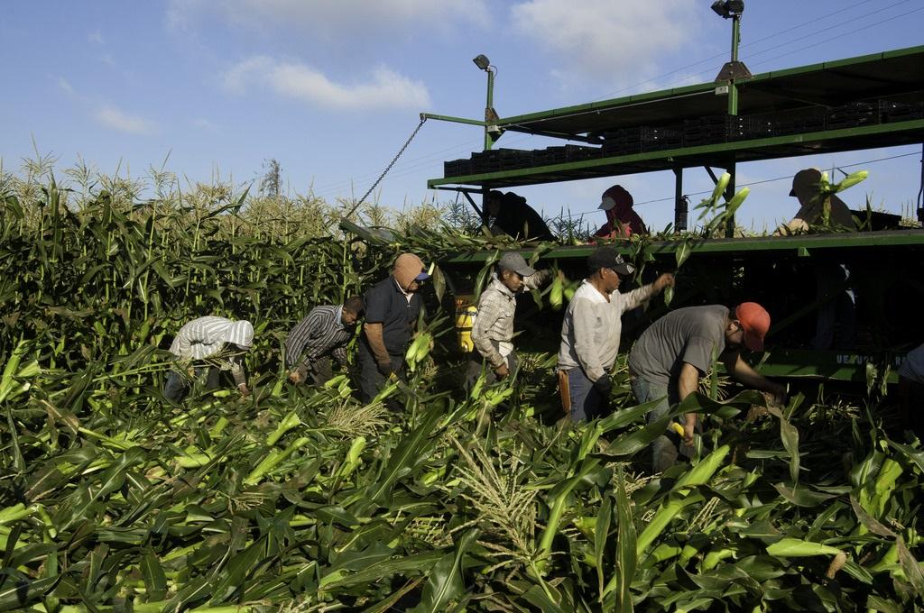 migrant_farmers_1.jpg