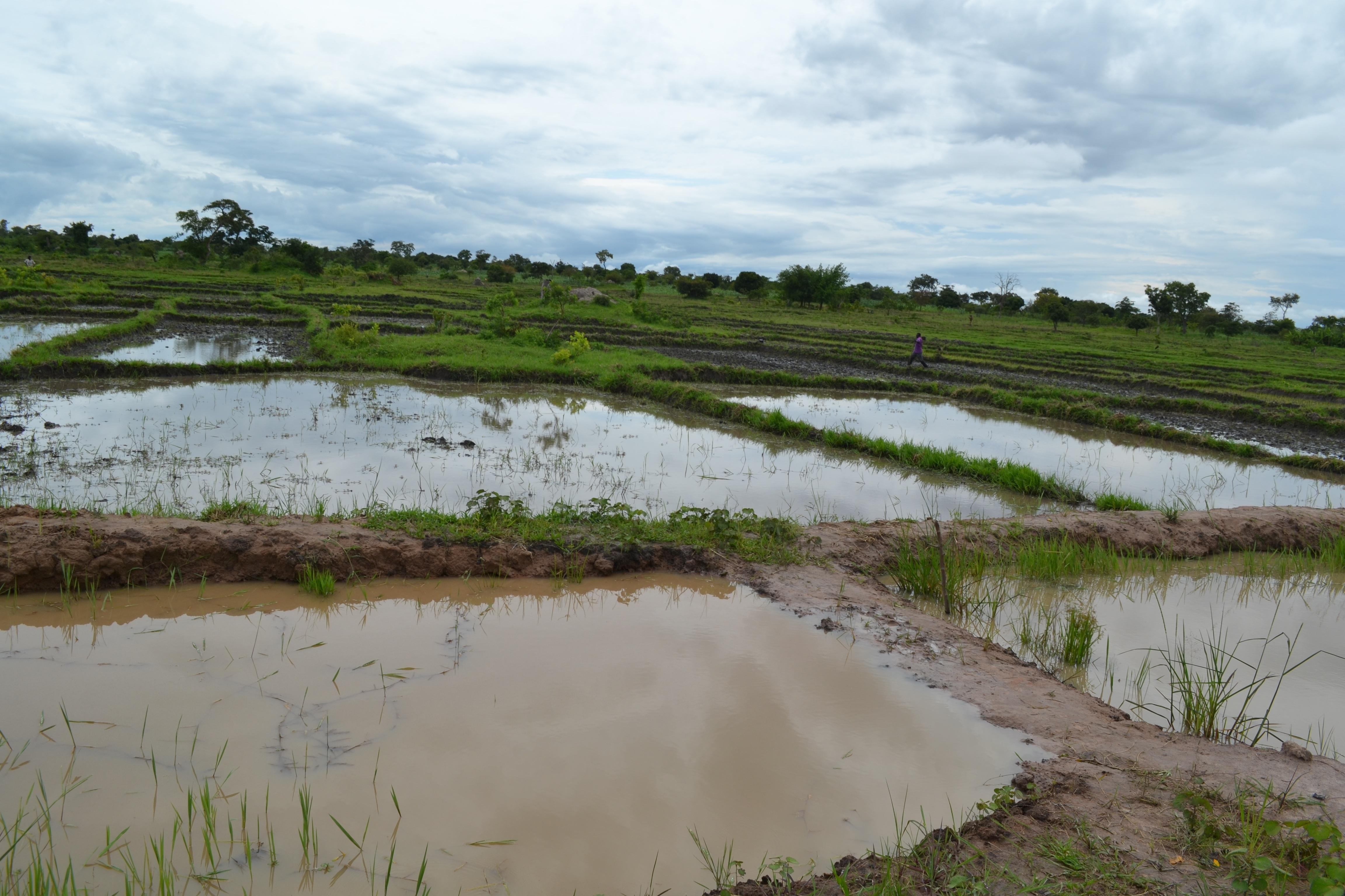 A_fish_pond_in_Lulembela_Village-1.jpg