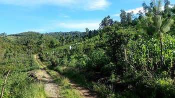San_Cristobal_-_Planting_trees_farm.jpg
